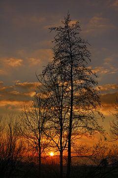 Zonsondergang en een bomensilhouet in het Friese landschap van Harrie Muis