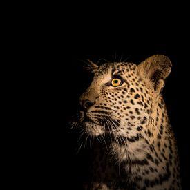 Leopardenporträt von Richard Guijt