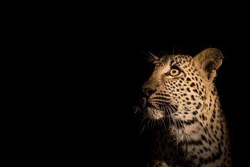 Luipaard portret van