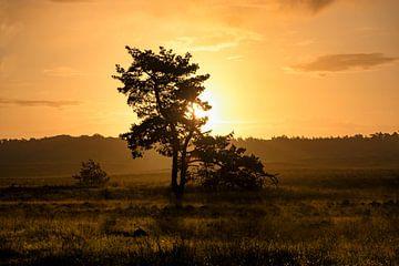 Sonnenaufgang auf der Heide von Roy van Poppelen