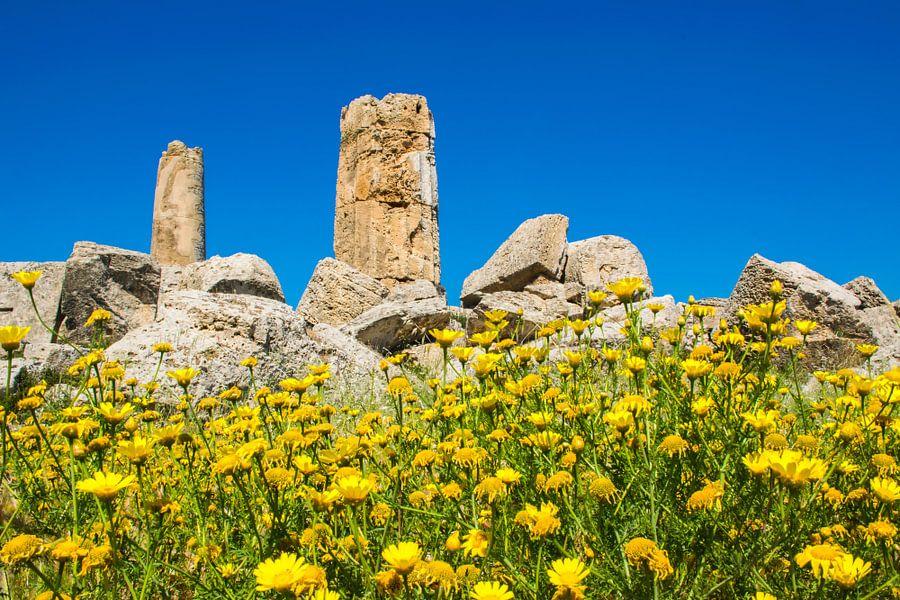 gelbe fr hlingsblumen f r den ruinen eines griechischen tempels auf leinwand poster bestellen. Black Bedroom Furniture Sets. Home Design Ideas