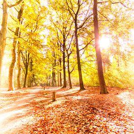 Forêt d'automne dorée sur Erik Reijnders