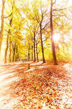 Forêt d'automne dorée