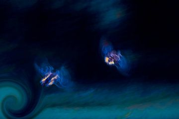 Meeuwen vliegen boven zee van Francis Dost
