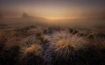 Renderklippen, mistige zonsopkomst von Jenco van Zalk