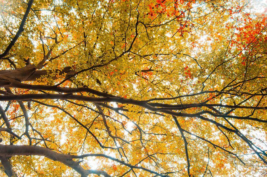 Herfstkleuren van Patrick Kerkhoff