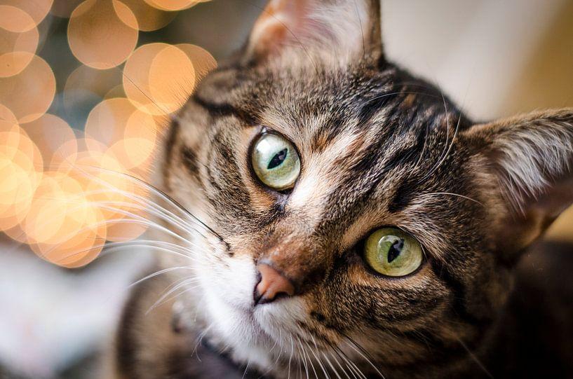 Christmas cat von Tom Keysers