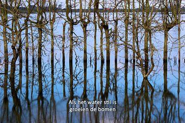 Als het water stil is groeien de bomen  von Irene Damminga