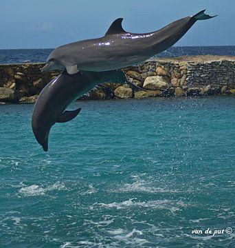 Dolfijnen show van Vincent Van de put