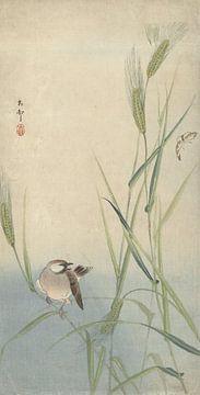 Vogel en vlinder van Ohara Koson