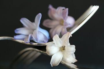 abstracte bloemen van Floor Wessels