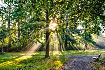 Sonnenstrahlen im Park von Michel Groen