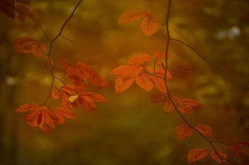 Herfstbladeren sur Minie Drost
