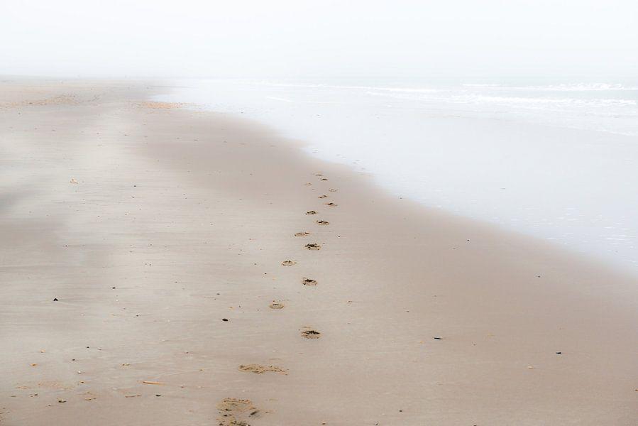 Verdwijnende voetstappen van Eddy Westdijk