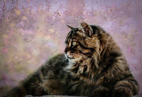 Kat king kleur van