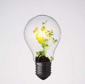 Plantje groeit in gloeilamp van