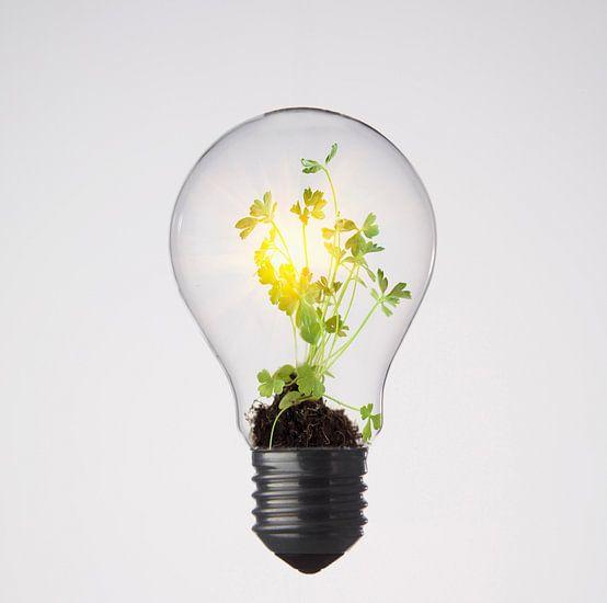 Plantje groeit in gloeilamp van BeeldigBeeld Food & Lifestyle