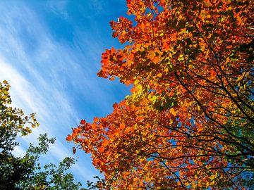 Kleuren van de herfst van Floris den Ouden