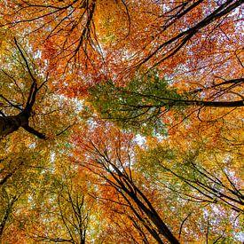 Herfstkleuren van Alex Hiemstra