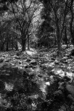 Der mystische Fluss Mauritius von Faucon Alexis