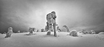Besneeuwde bomen van Denis Feiner