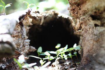 Hollow Tree van Erwin Delsman