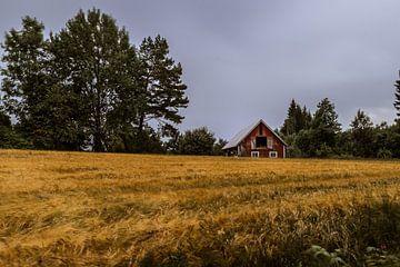 Schuur in Zweden voor een graanveld von Tim Laan