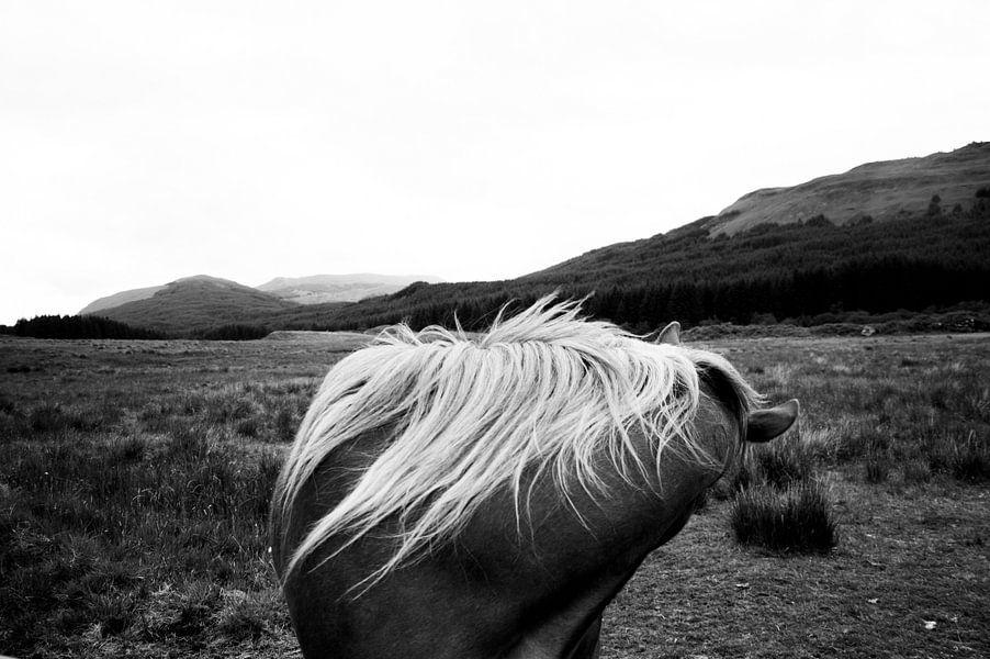 Paard in Schotland van Lennart Stolte