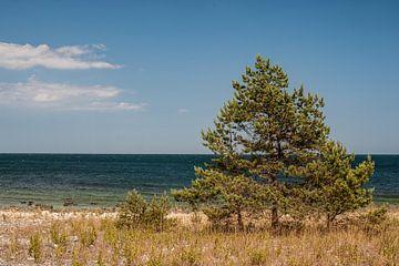 Seaside Öland Sweden von Lysanne Artcrafx