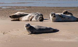 Zeehonden van Ingrid Aanen