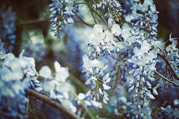 Blauwe Regen van Mandy Jonen