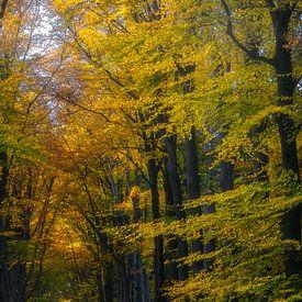 Zwarteweg, Lage Vuursche von Pascal Raymond Dorland