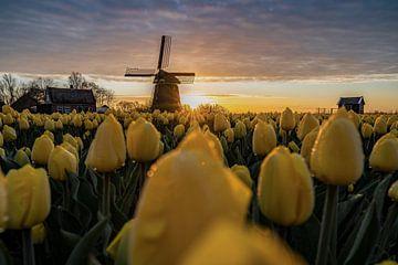 Mühle Noorder-G mit gelben Tulpen von Manuuu S