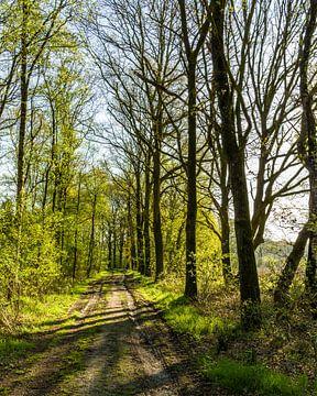 Waldweg im Morgenlicht von Tony Buijse