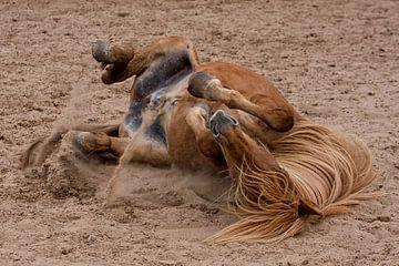 IJslander paard in het zand von Wybrich Warns