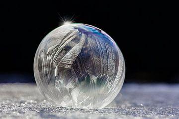 Bevroren veren van Nanouk el Gamal - Wijchers (Photonook)