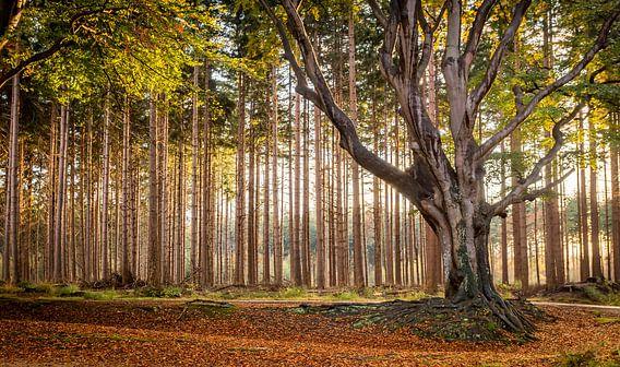 Herfst in het Bos van Bakkeveen van Martijn van Dellen
