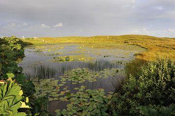 Waterlelies von Annick Cornu