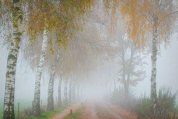 Neblige Landstraße (ohne Auto) von Francis Dost
