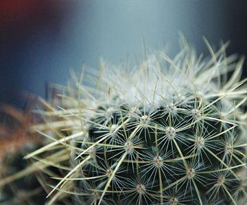 Kaktus-Spinnennetz von Marije Zwart
