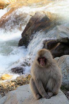 Snow monkey (Japanese macaque) van Ioanna Stavrakaki