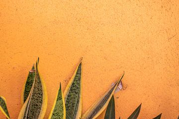 Planten op oranje muur - Aruba van Bianca Kramer