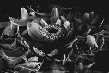 Als die Blumen blühten von Lynlabiephotography