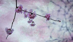 Bloesemtak in de lente van