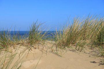 duinen aan zee van Micky Bish
