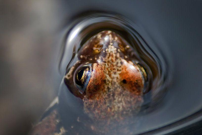 Red frog van Mariska Hofman
