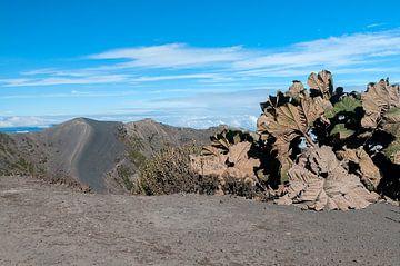 Costa Rica: Irazú Vulkaan van Maarten Verhees