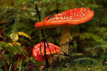 Deux champignons sur Heike Hultsch