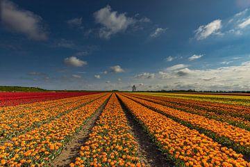 kleurige velden van peterheinspictures