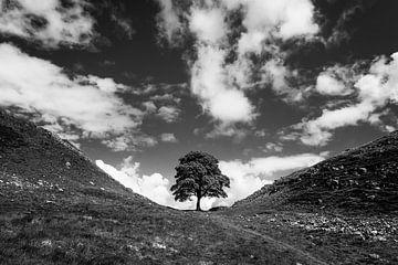 A Tree van Johanna Blankenstein